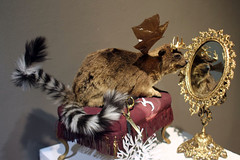 3rd Biennial Taxidermy show15