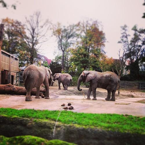 Elegant der Elefant #ZOOBasel