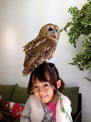 """Owl Cafe 16 • <a style=""""font-size:0.8em;"""" href=""""http://www.flickr.com/photos/66379360@N02/10588774296/"""" target=""""_blank"""">View on Flickr</a>"""