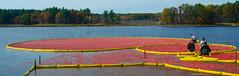 Cranberry Bog Harvesting