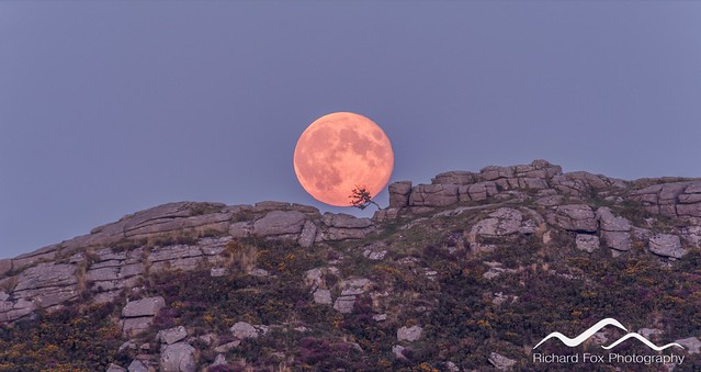 Sharp Tor Moonrise