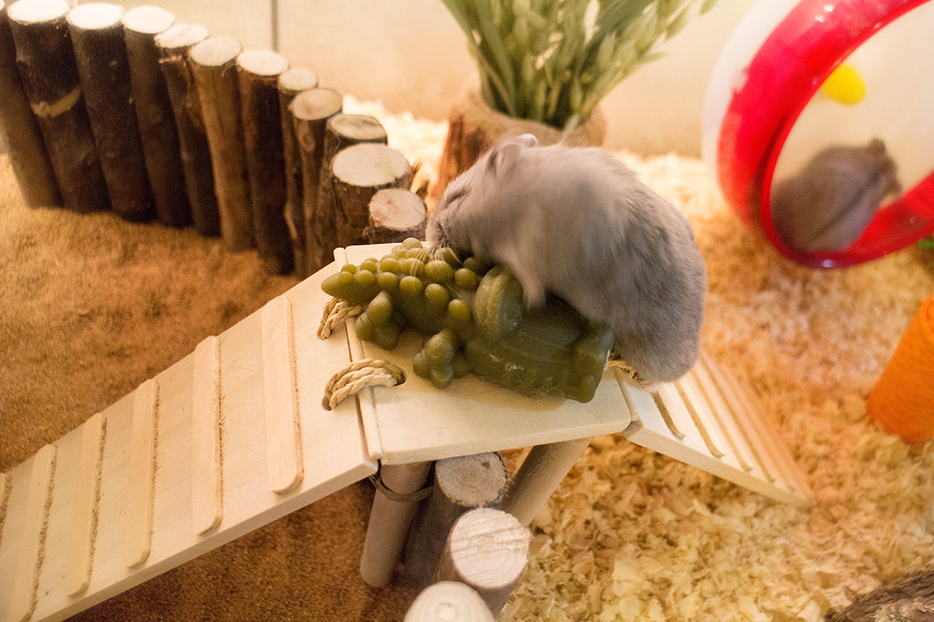 The Worlds Best Photos of hamster and terrarium  Flickr