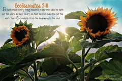 """Ecclesiastes 3:11 • <a style=""""font-size:0.8em;"""" href=""""http://www.flickr.com/photos/95703371@N00/14971290726/"""" target=""""_blank"""">View on Flickr</a>"""