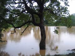 Kollibacchalu Dam -Malenadu Heavy Rain Effects Photography By Chinmaya M.Rao   (130)