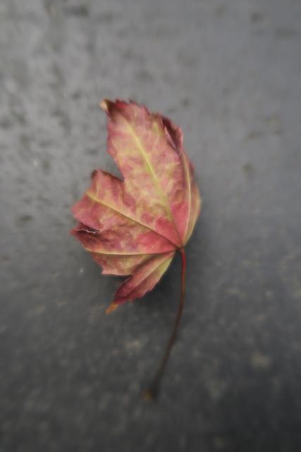 小さい秋みつけた~