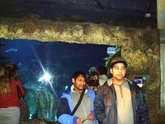 Visit to SEA LIFE London Aquarium