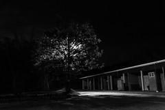 A árvore luminosa