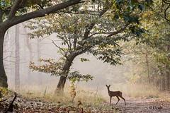 Voor dag en dauw - Ontmoeting in het bos.