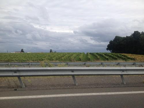 Nous arrivons dans une région viticole.