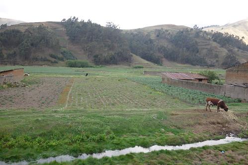 Nous traversons les andes, en passant par quelques champs cultivés