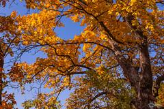 Herbst an der Saaleschleife-6