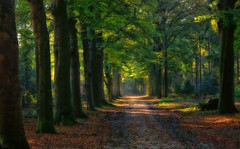 A forest lane...