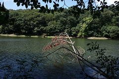 belgrad ormanı - valide sultan göleti