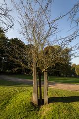 Automne au parc de Woluwe (Bruxelles)