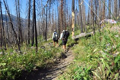 Hiking through burn areas south of Yellowstone