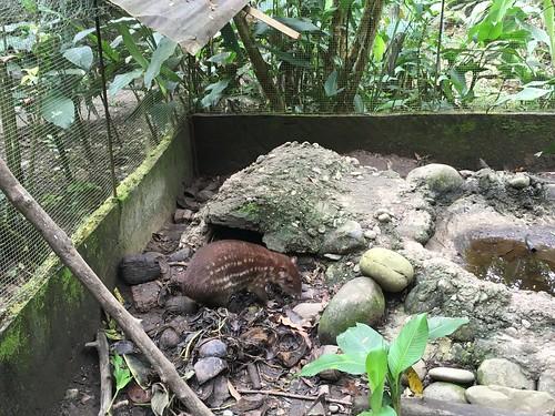 Un jochi, un autre mammifère typique de la Bolivie