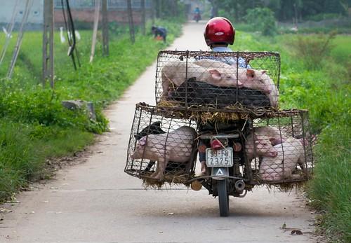 Around Hanoi
