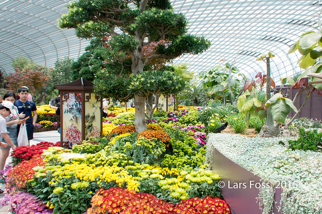 Inside Flower Dome in Gardens by the Bay