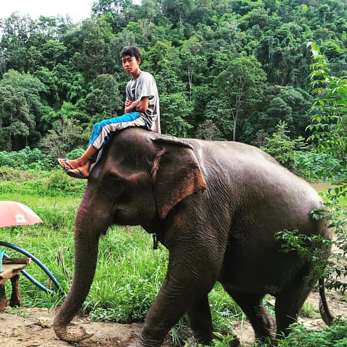 #easyrider  @ Maetaeng #Elephant #Camp #Jungle #ChangMai #Thailand  #thailoup #traveloup
