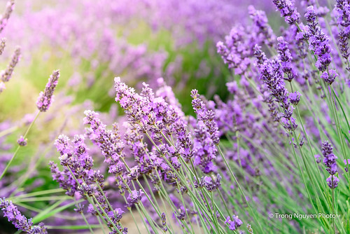 "The Purple • <a style=""font-size:0.8em;"" href=""http://www.flickr.com/photos/132142211@N05/23729698542/"" target=""_blank"">View on Flickr</a>"