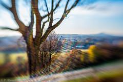 "Am Felix mit dem Lensbaby • <a style=""font-size:0.8em;"" href=""http://www.flickr.com/photos/58574596@N06/22247025933/"" target=""_blank"">View on Flickr</a>"