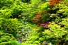 Photo:Kongorin-ji, Garden -1 (May 2012) By