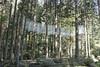 Photo:杜の蜃気楼 Mirage in the forest 御岩神社 県北芸術祭 Kenpoku Art 縣北藝術祭 By