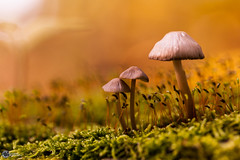 Herbst an der Saaleschleife-4