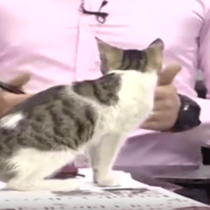 """Gato """"invade"""" programa de TV na Turquia e surpreende apresentador; assista"""