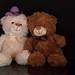 Teddy with friend