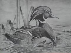 Josh T_duck Stamp