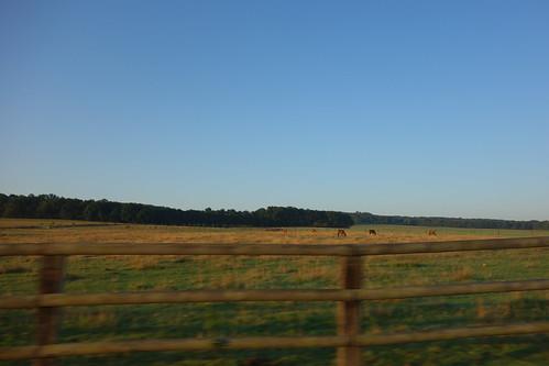 Sur le bord du chemin, de nombreux chevaux.