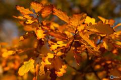 Herbst an der Saaleschleife-7