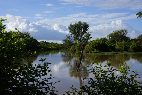 Burkina Faso : Réserve de Nazinga