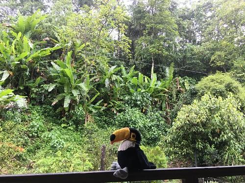 Il pleut très souvent ce week end là, et Pelico doit se glisser entre les gouttes !