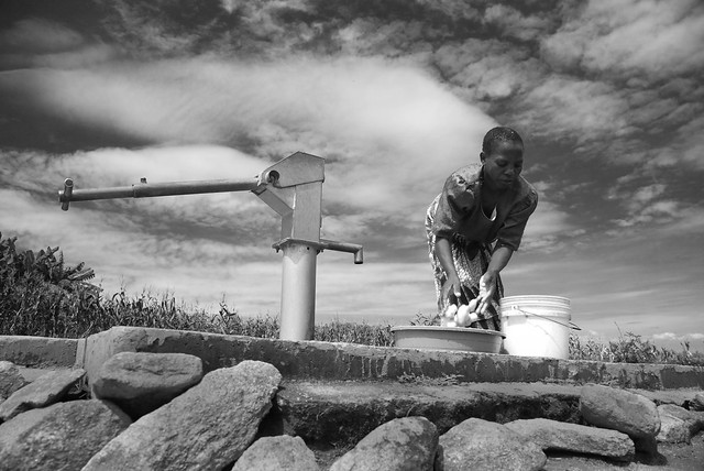 Washing harvested potatoes in a village in central Malawi