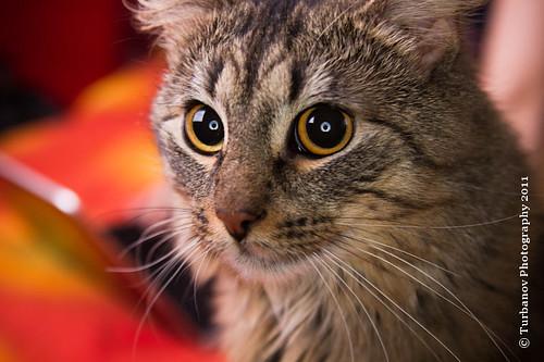 cat-7865