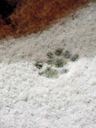 snowprintsN1578