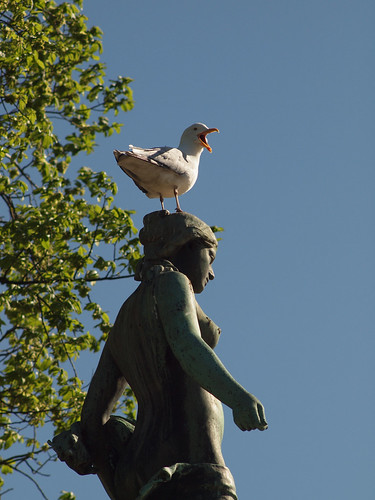 138/366 - Johanna and the bird by Flubie