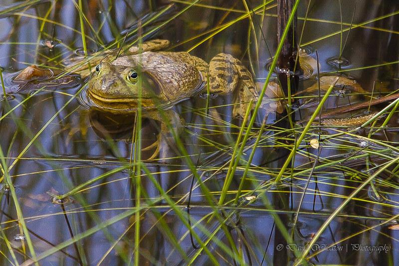 frog_grass