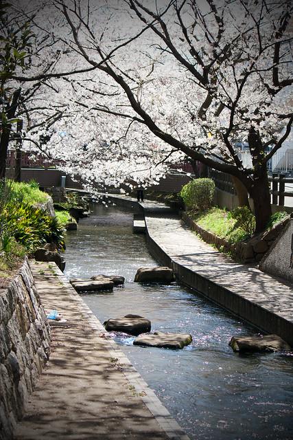 Sakura (3/6)