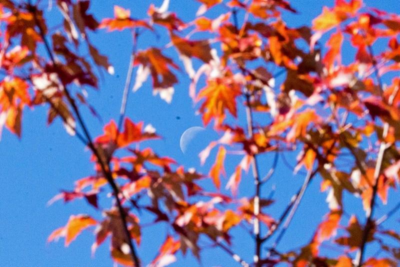 _DSC4600 Moon