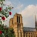 Roses + Notre Dame