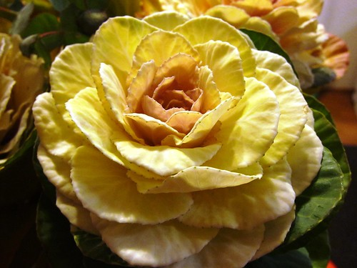 102710 003 - Cabbage Roses
