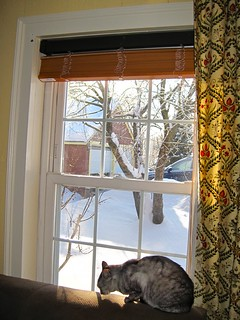 cat in sunny window