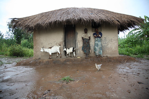 Malawi livestock household in the rainy season
