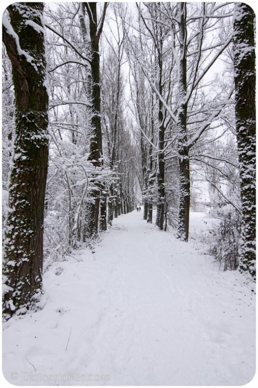 Entre árboles
