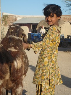 Rajasthan girl tending the family goat in India