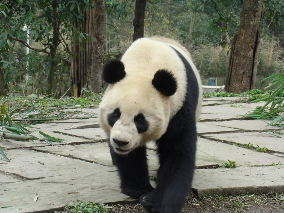 Bi Feng Xia-Centro de Conservación Ya'An-China 13 Patrimonio de la Humanidad Unesco