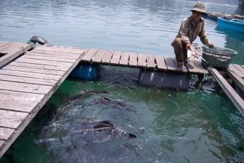 Besuch Pangasius Fischzucht 20